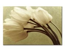 Obraz na płótnie OKW025_11 - Białe tulipany
