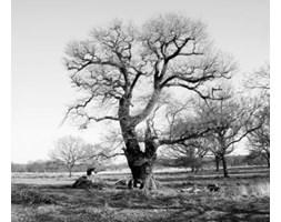 Fototapeta F2642 - Drzewo na czarno białym tle
