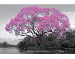 Ogromne Drzewo - Różowe Kwiaty - plakat