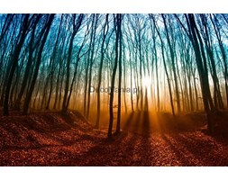 Fototapeta F045 - Jesienny krajobraz