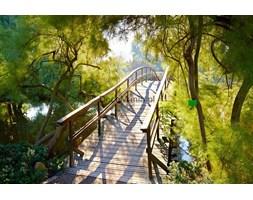 Fototapeta F3119 - Most nad rzeką w parku