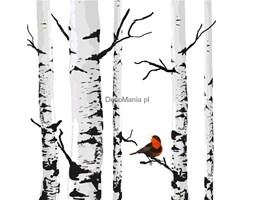 Fototapeta F2395 - Czerwony ptak na brzozie