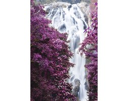 Fototapeta F2646 - Drzewa z fioletowymi liśćmi z wodospadem w tle