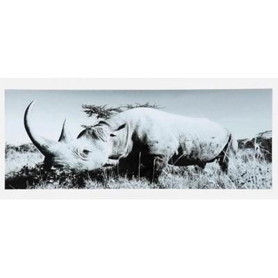 Obraz Rhino Kare Design 35847