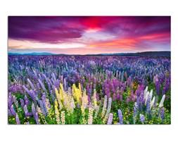 Łąka pełna kwiatów, Obraz na płótnie - Canvas