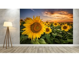 Tapeta Sunflowers - 450 x 300 cm