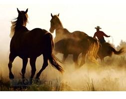 Fototapeta konie 270 x 360 cm