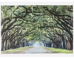 Kare Design Obraz Avenue of Trees - 38475