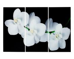Invicta Interior Obraz Orchid (3/Set) - i36004