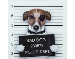 Kare Design Obraz Bad Dog - 37289