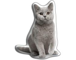 Poduszeczka Kot brytyjski krótkowłosy