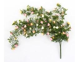 Róża pnącze 75 cm - kremowo-różowy
