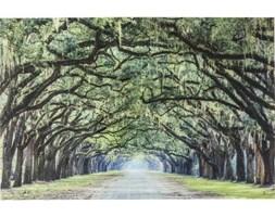 Obraz Avenue of Trees