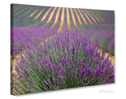 "Obrazy drukowane Canvas Panorama Lawendowe Pole - <span style=""font-weight: normal; color: #0a0;"">na zamówienie</span>"