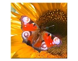 Eglo 75037 - Świecący obraz LED dekoracyjny BUTTERFLY 4xLED/0,02W