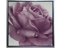 Obraz 72x72cm Rose