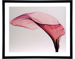 Obraz 92x78cm Calla