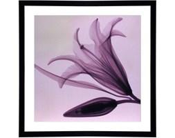 Obraz 78x78cm Lily