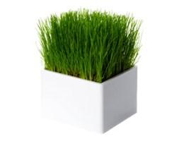 Mini ogródek Mini Green