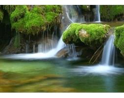 Leśny Wodospad - fototapeta
