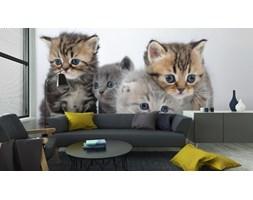 Fototapeta Grupa Małych Kociąt