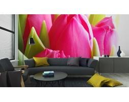 Fototapeta Close-Up Z Bukietem Różowych Tulipanów Na Białym Tle