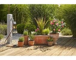 Rośliny Na Wietrzny Balkon Pomysły Inspiracje Z Homebook
