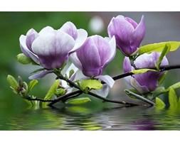 Fototapeta Consalnet Magnolia 160VE