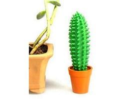 Doniczki Na Kaktusy Pomysły Inspiracje Z Homebook