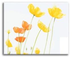 Macro - Żółte kwiaty - 50x40 cm - G92803