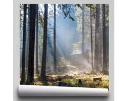 Fototapeta drzewa i promienie słońca w lesie