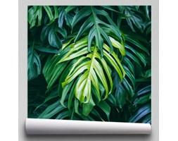 Fototapeta liście monstera tropikalna dżungla