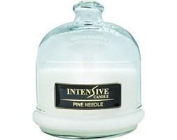 INTENSIVE COLLECTION 100% Soy Wax Premium Candle B2 Jar świeca zapachowa w szkle z kloszem 100% wosk sojowy - Pine Needle