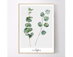 Plakat Eukaliptus