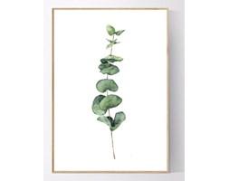 Plakat Gałązka eukaliptusa no.1