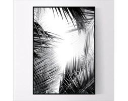 Plakat Czarno białe palmy no.1
