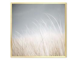 TRAWA obraz w złotej ramie, 63x63 cm