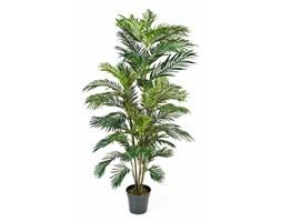 Palma Areka - 90cm