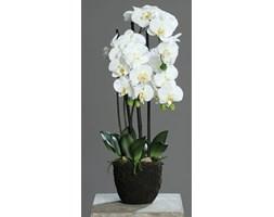 Storczyk Phalaenopsis w Sztucznej Ziemi 55 cm
