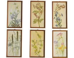 Komplet sześciu grafik botanicznych, lata 50.