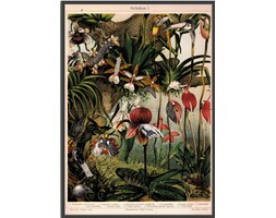 Plakat Orchidee 50x70, aut. J. Stączek, Wall-being