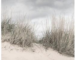 Fototapeta REBEL WALLS | SCANDINAVIA Pale Shore